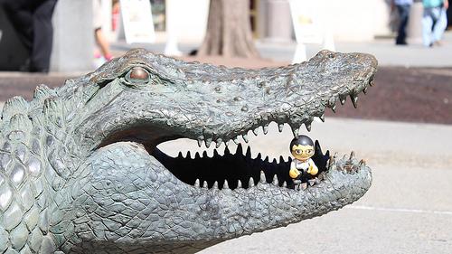 alligator orlando
